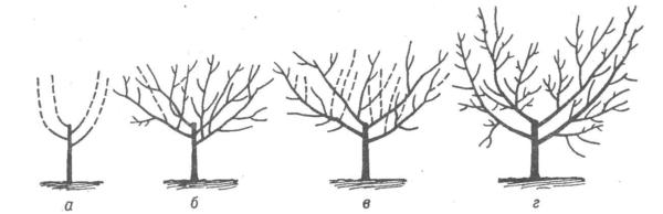 Обрезка орехового дерева осенью